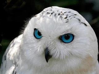 white owl spiritual networks
